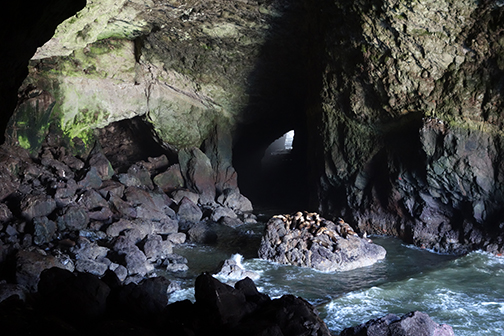 sea lion cave for blog